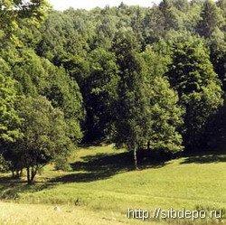 В Кузбассе состоялись первые торги лесных массивов