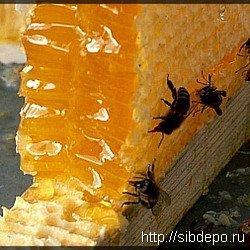 'Пчеловоды