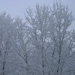Кузбассовцев предупреждают о сильных морозах