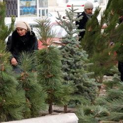 Незаконно вырубленные деревья везли в Новосибирск на теплоходе