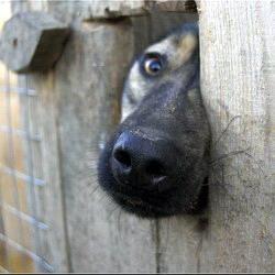 'Собака