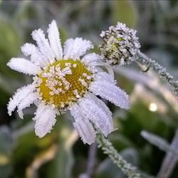 В Кемерове ночью возможны заморозки до минус 2