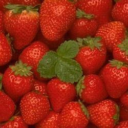 Дачники Кузбасса могут продать ягоду кооператорам