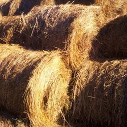 Регионам пострадавшим от засухи помогут сеном