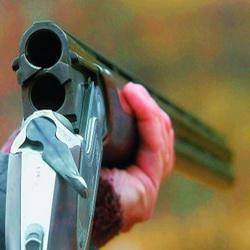 За незаконный отстрел лося грозит 80 000 штрафа