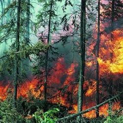 Памятки о пожарной безопасности в лесу раздают в кузбассовцам