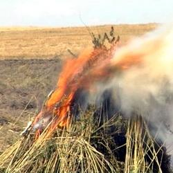 4 500 тонн конопли уничтожено в Кузбассе