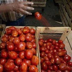 День помидора прошёл в Красноярском крае