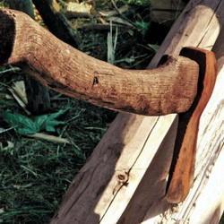 """Две группы """"чёрных лесорубов"""" ликвидированы в Томской области"""
