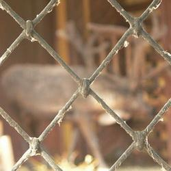 В Кузбассе задержали армянский зоопарк