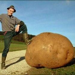3 000 рублей - за  клубень картофеля
