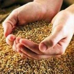 Тулеев поставил задачу: собрать не менее 1 миллиона тонн зерна