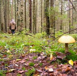 В Кузбассе нашли пропавшего грибника