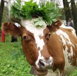 Грузовой состав протаранил стадо коров