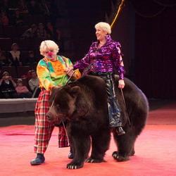 'Медведь-гигант