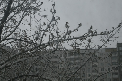 Глобально о погоде