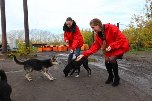 Помощь приюту бездомных животных