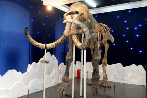 В кемеровском музее выставлены скелеты кузбасских динозавров (фото/видео)