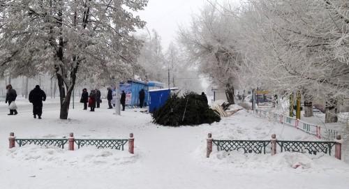 В Кемерове появились ёлочные базары