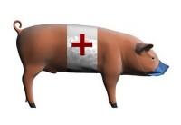 В Европе свирепствует свиной грипп