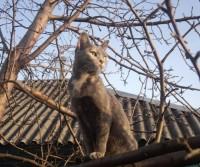 Кошка Муля, хозяйка Наталья Семина