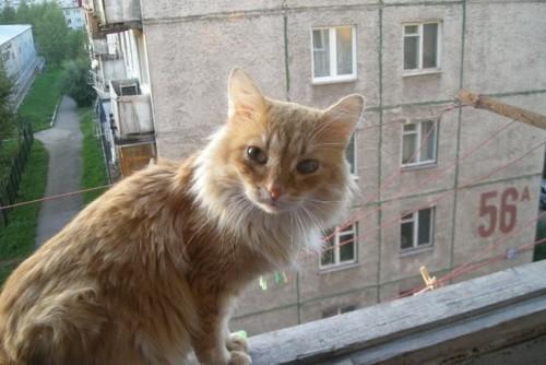 Кот Сибиряк Феликс, хозяйка Ангелина Янышевская