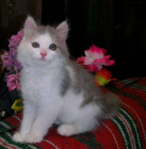 Кот Тёма, хозяин Евгений Невзоров