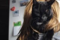 Кошка Варежка, хозяйка Екатерина Умнова