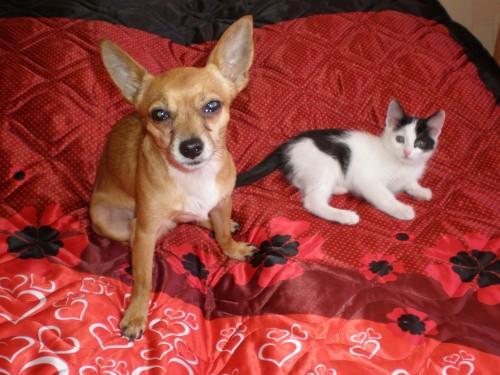 Кошка Макушка и пёс Сёмен, хозяйка Юлия Макарова