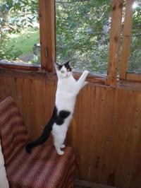 Кошка Макушка, хозяйка Юлия Макарова