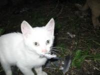 Кот Белый, хозяйка Татьяна Хорошева