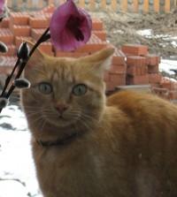 Кошка Мура, хозяйка Татьяна Хорошева