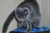 Кошка Мася, хозяйка Елена Левшова