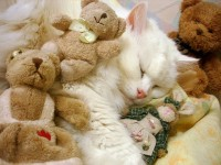 Кошка Муся, хозяйка Александра Грекова