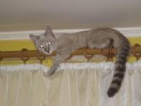 Кошка Нэсся, хозяйка Олеся Алтемерова