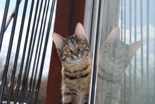 Кошка Даша, хозяйка Анна Слободчикова