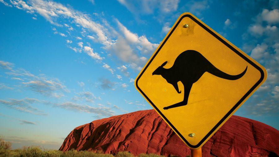 Изумительный прыжок кенгуру через едущего велосипедиста попал навидео