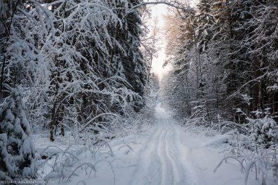 В Томской области школьники вместе с учительницей заблудились в лесу во время урока физкультуры