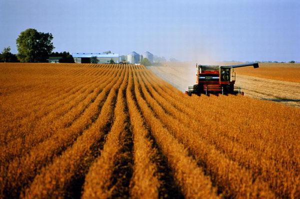 Руководство назвало 29 неблагоприятных для сельского хозяйства регионов