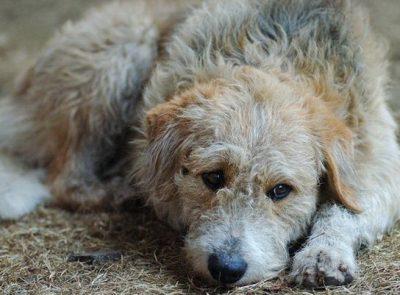Прокуратура предложила принять кузбасский закон о содержании безнадзорных животных