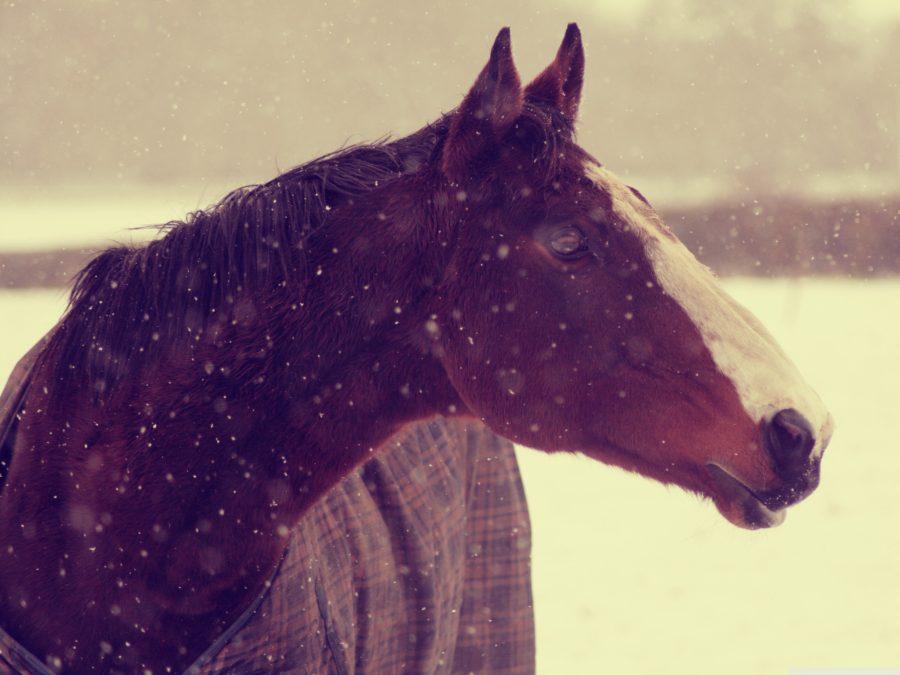 Попавший вДТП из-за лошади гражданин Промышленновского района, оплатит вред звериным