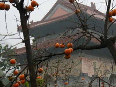 В Китае нашли 350-летнюю гробницу династии Мин