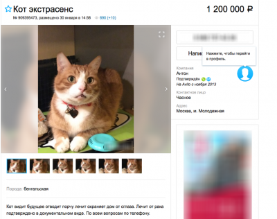 В Москве за 1,2 млн рублей продают «кота-экстрасенса»