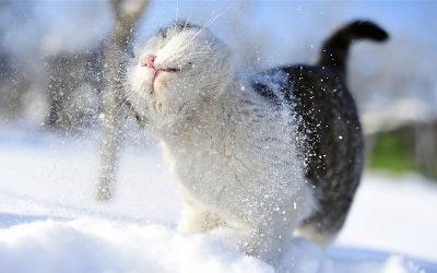 Кемеровский гидрометцентр: март ожидается тёплым