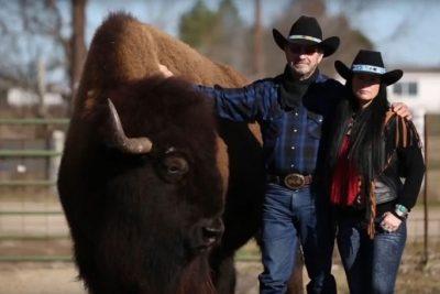 Американский фермер приучил буйвола весом больше тонны смотреть с ним телевизор