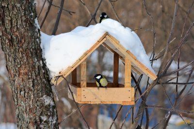 В масленичную неделю в Кемерове откроют кафе для птиц
