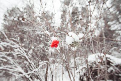 В выходные в Кузбассе ожидается похолодание до -36°С