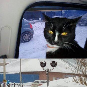 Путешественник из Нижнего Тагила привёз кота Графа в Кемерово