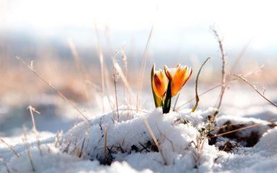 В первые выходные марта в Кузбассе потеплеет до +7°С