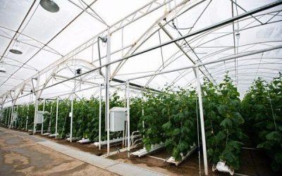 В Кузбассе продают тепличный комплекс за 770 миллионов